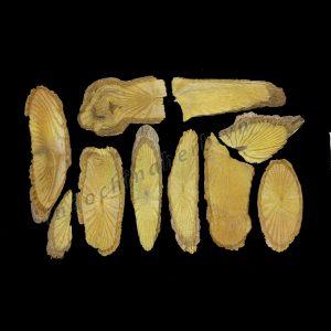 Caulis Fibraureae - Hoang dang - 黄藤 huang teng